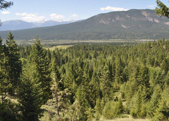 Attractive View Acreage in the Columbia Valley - Radium Hot Springs, BC