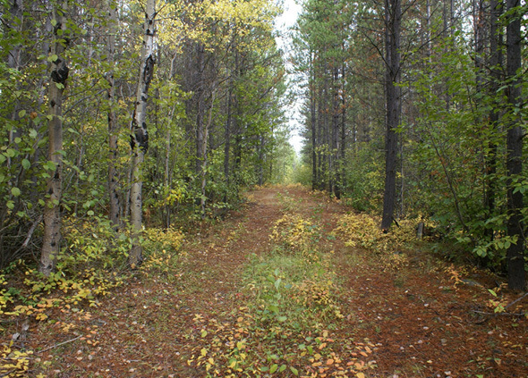 Affordable Acreage in Rural Setting - Cluculz Lake