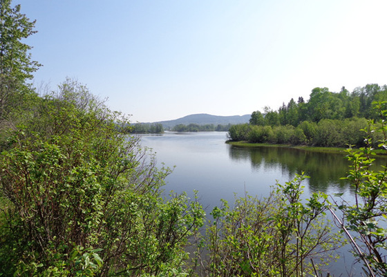 Three Wooded Contiguous Lakefront/Riverfront Acreages - Fort St. James, BC