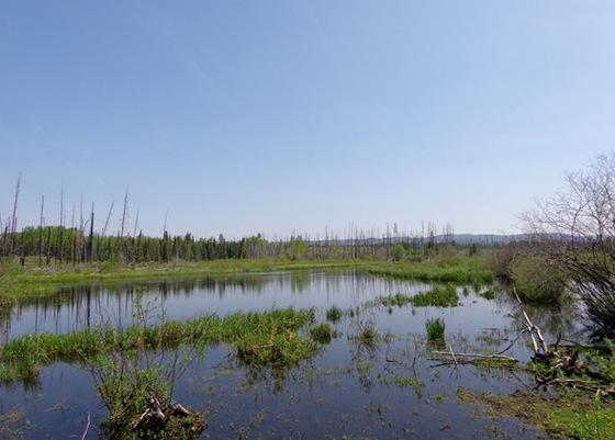 Batnuni Road - Remote 320 Acre Parcel Approx. 80 km Northwest of Quesnel