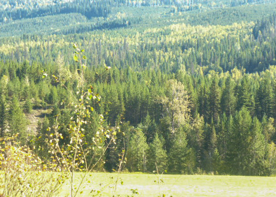 Large Timbered Acreage - Clearwater, BC