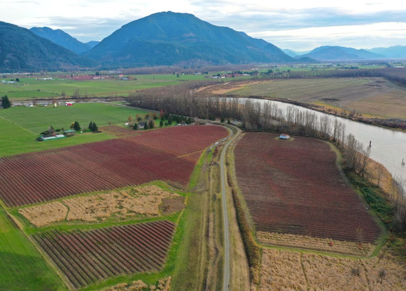 Fertile Blueberry Farmland Nestled Along the Banks of the Fraser River - Mission, BC