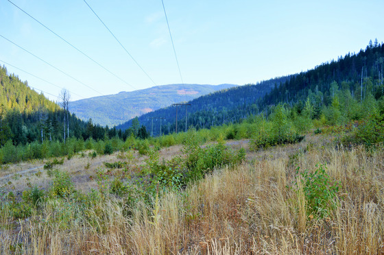 Large Affordable Acreage Backing onto Wilderness - Cherryville, BC