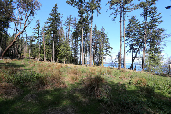 Sidney Island Oceanfront - Strata Lot 127 - Southern Gulf Islands, BC