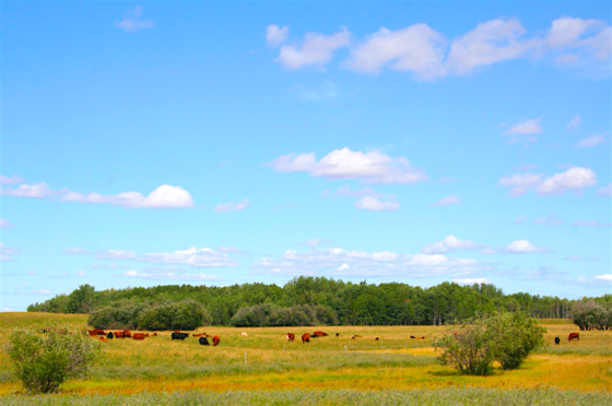 Outdoorsmen's Paradise - 320 Fertile Acres with Abundant Wildlife - Rycroft, Alberta