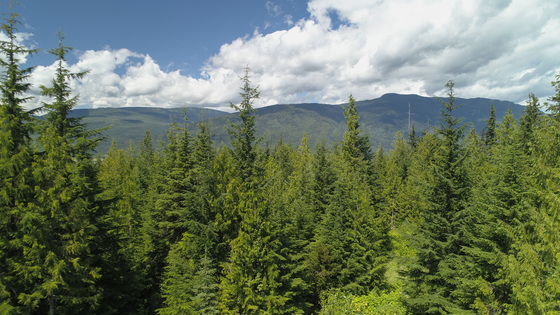 Private Acreage - Eagle Bay, South Shuswap
