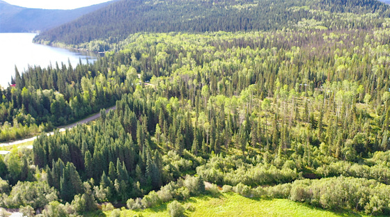 5.15 Private Acres in the Beautiful Region of Bowron Lake, BC
