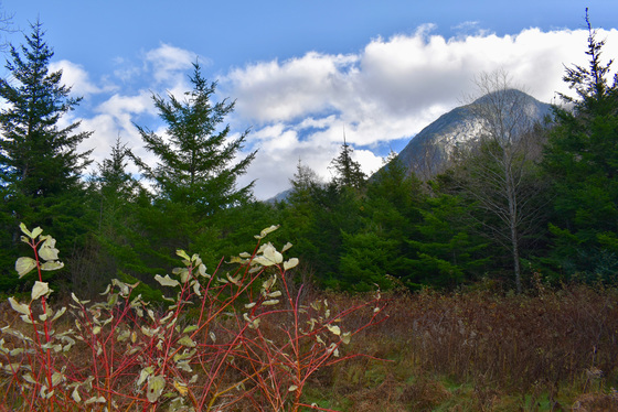 41 Acre Bare Land - Bella Coola, BC
