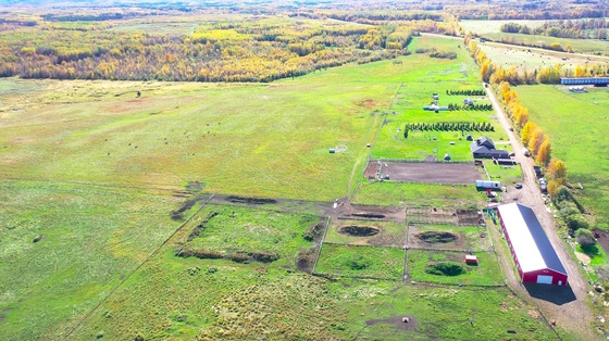 Lazy W Ranch: Working Cattle Ranch with Equestrian Center - Slave Lake, Alberta