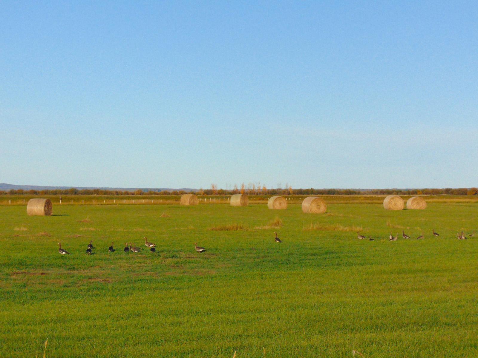 Lazy w ranch 018