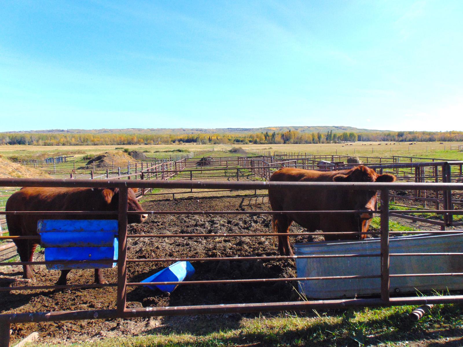 Lazy w ranch 031