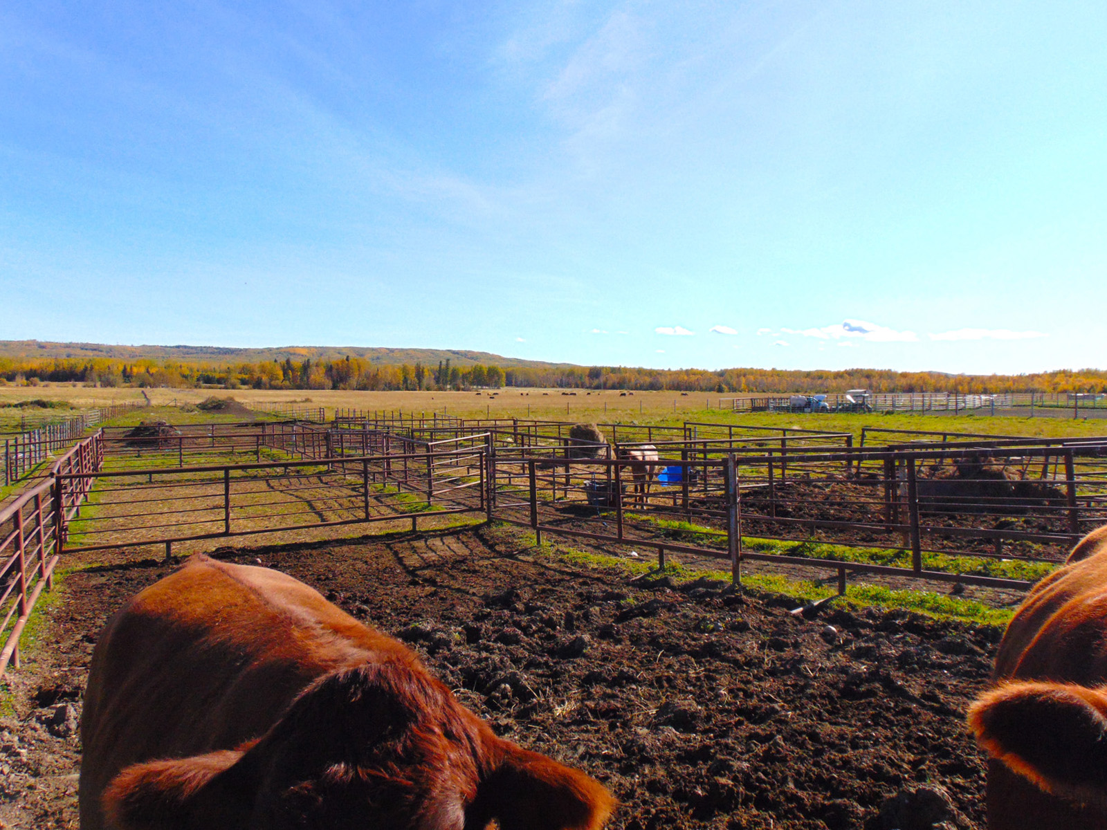 Lazy w ranch 032