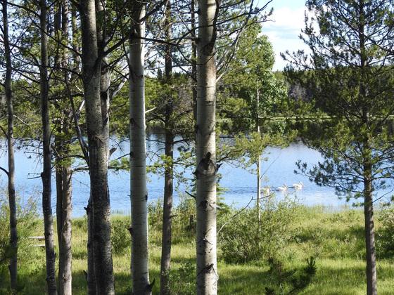Thumb lessard lake 04