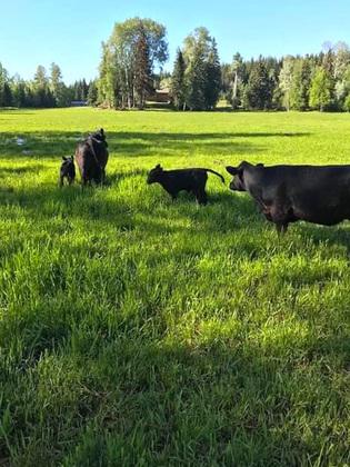 Thumb quesnel farm 59