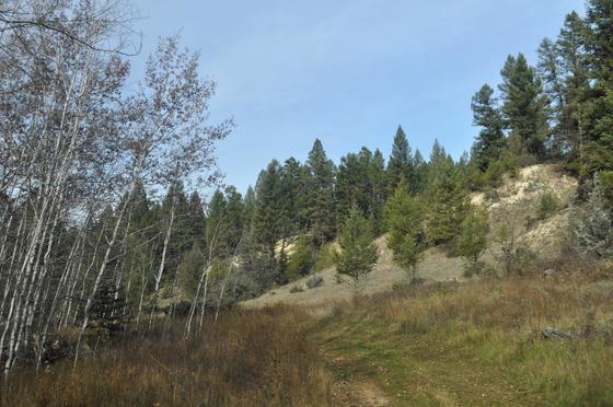 Thumb edgewater recreational acreage 04