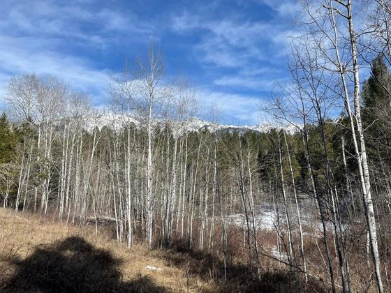 Thumb edgewater recreational acreage 16
