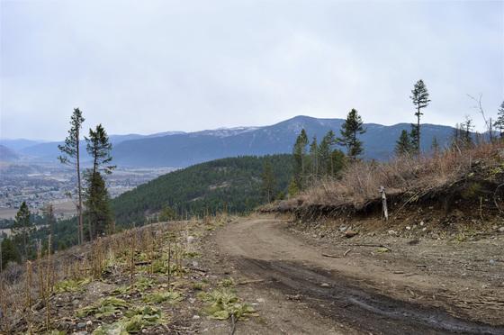 Thumb hardy mountain acreage 21