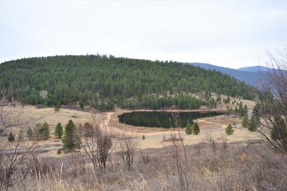 Thumb hardy mountain acreage 31