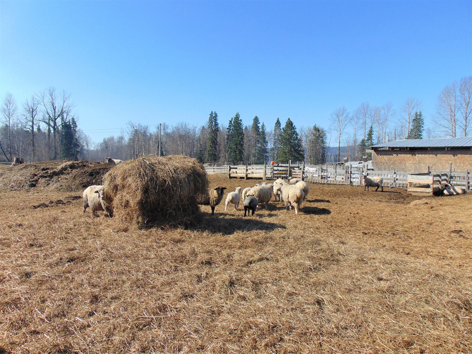 Prince george farm 40