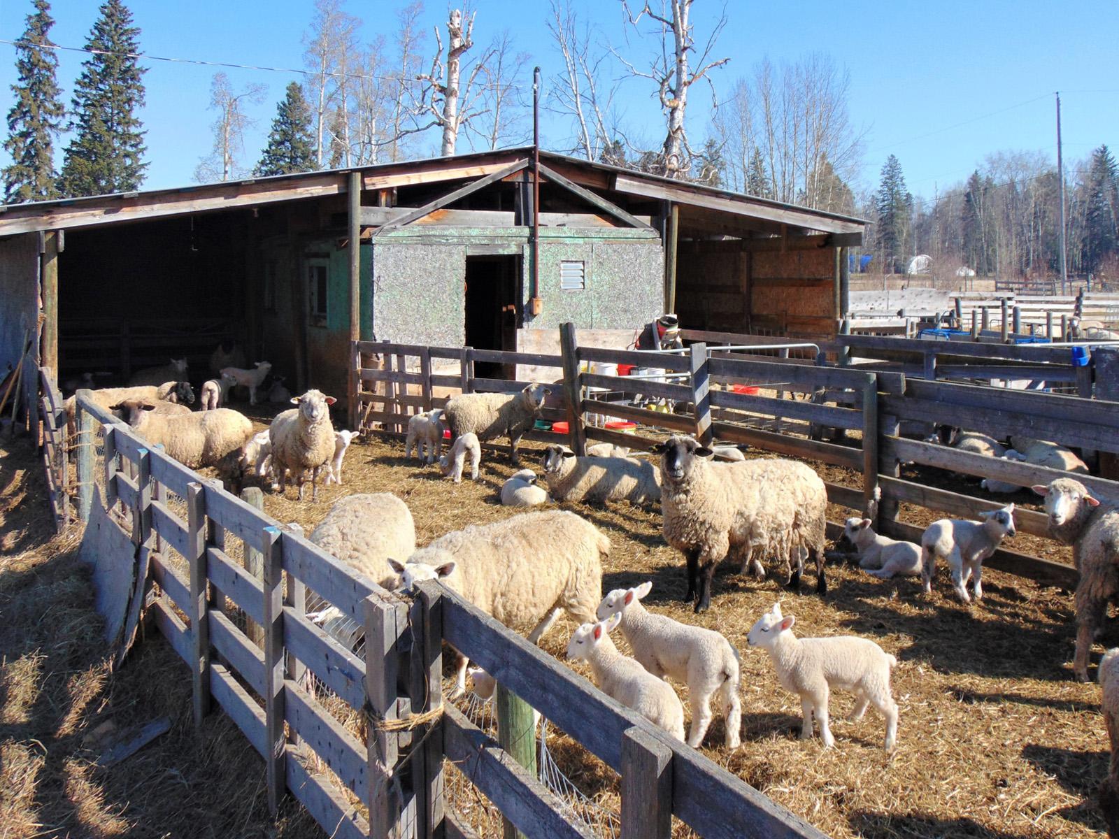 Prince george farm 41