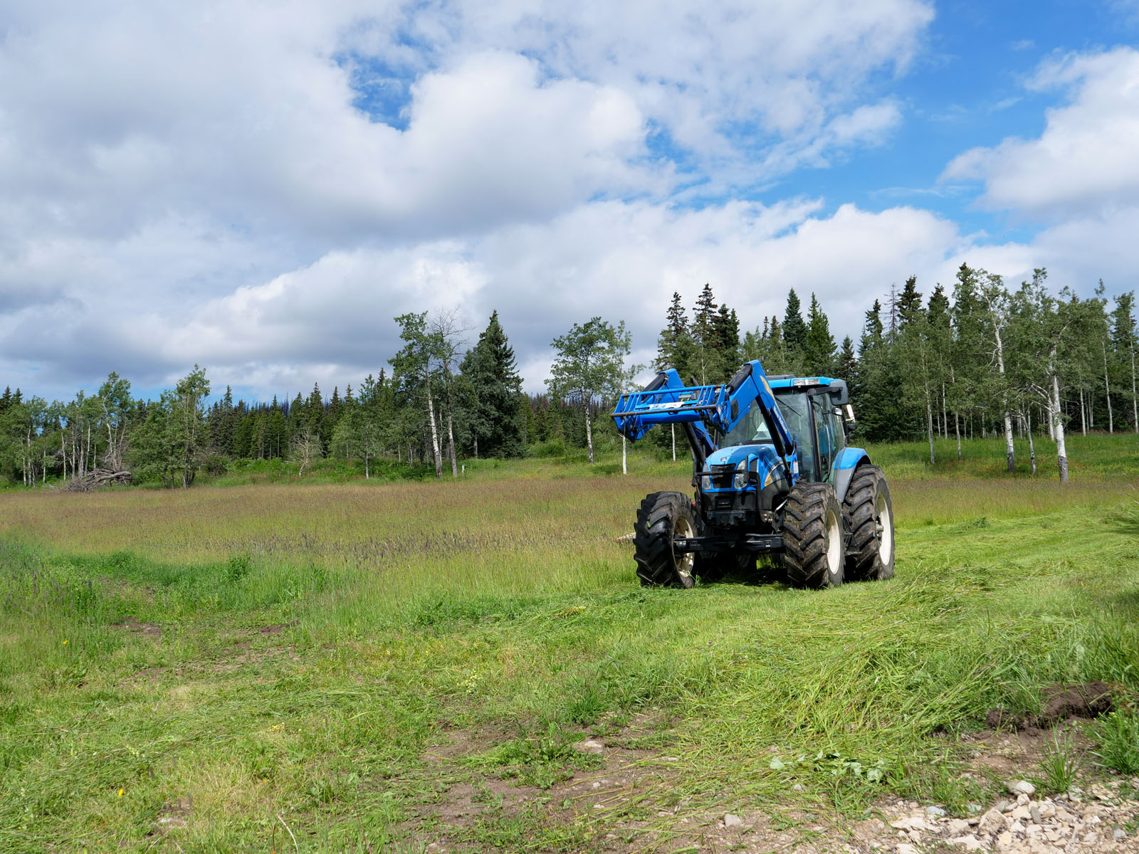 Wistaria cattle ranch 10
