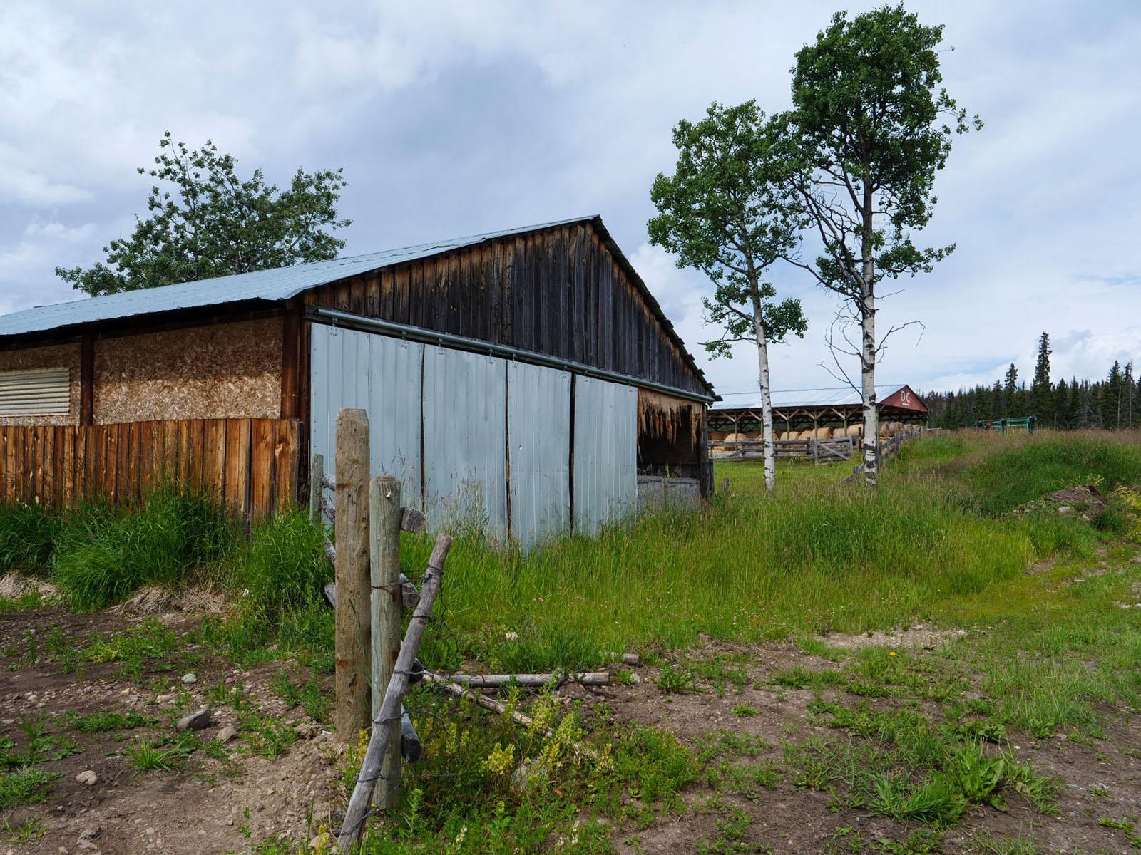 Wistaria cattle ranch 40