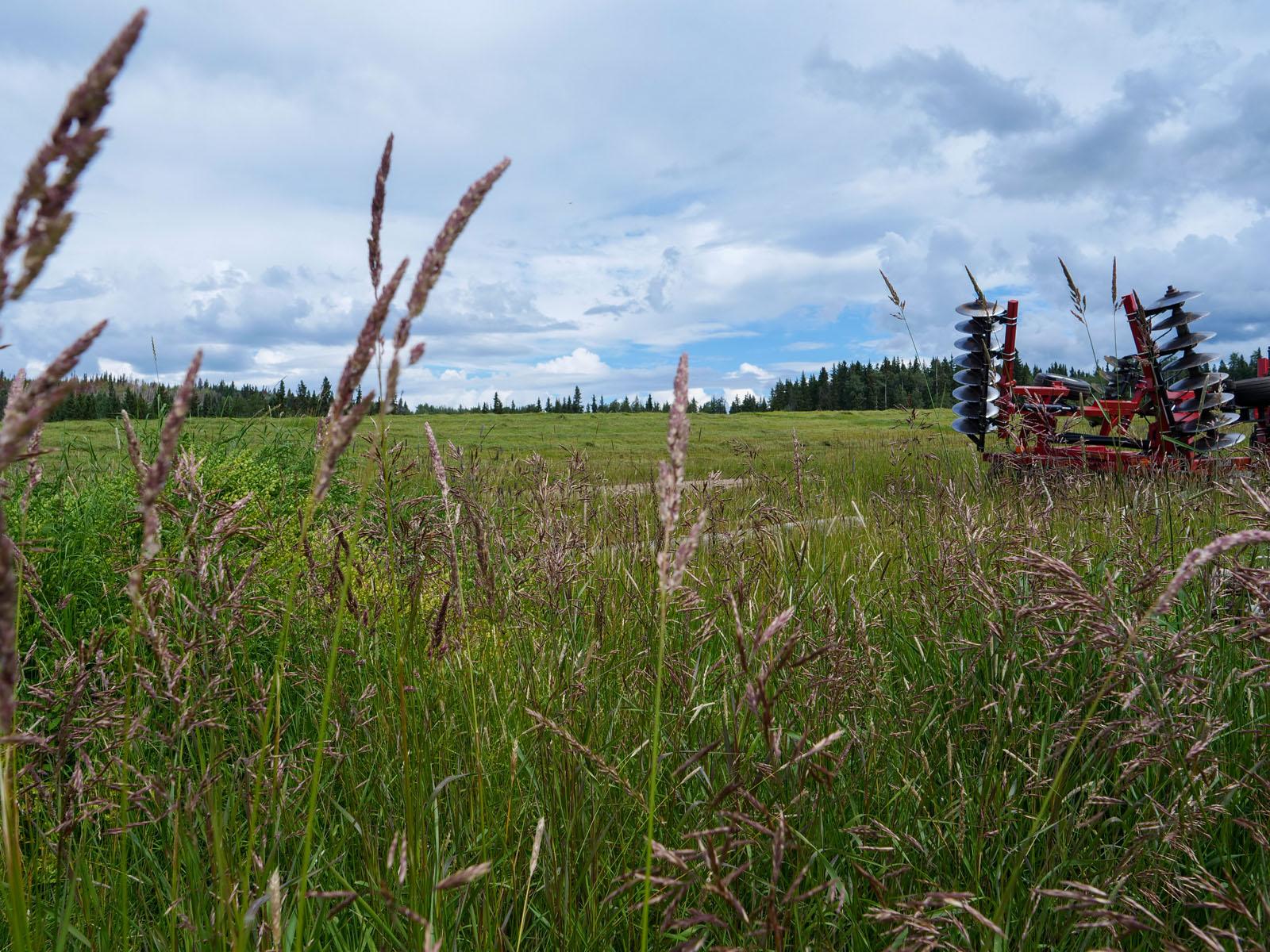 Wistaria cattle ranch 44