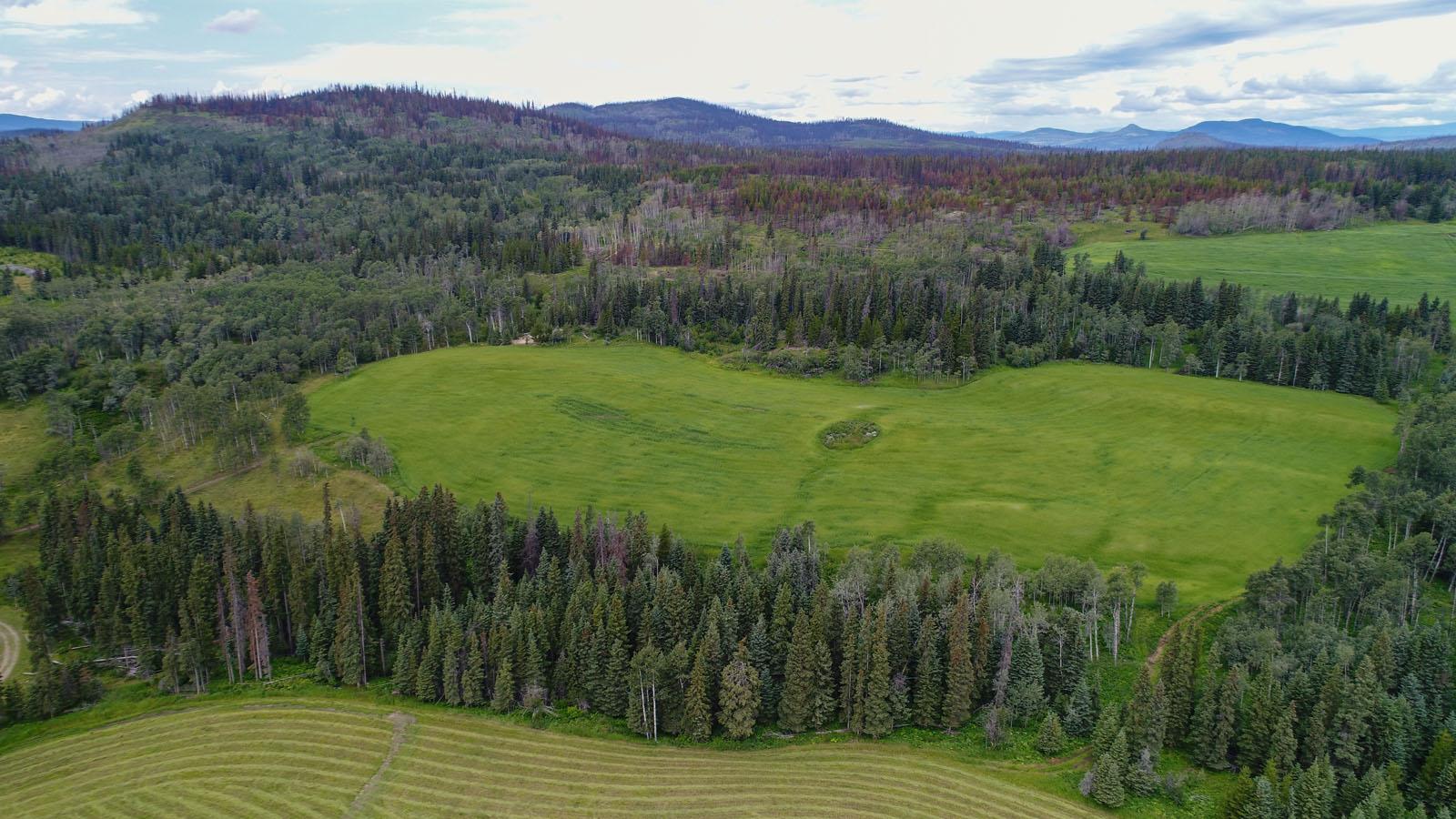 Wistaria cattle ranch 53