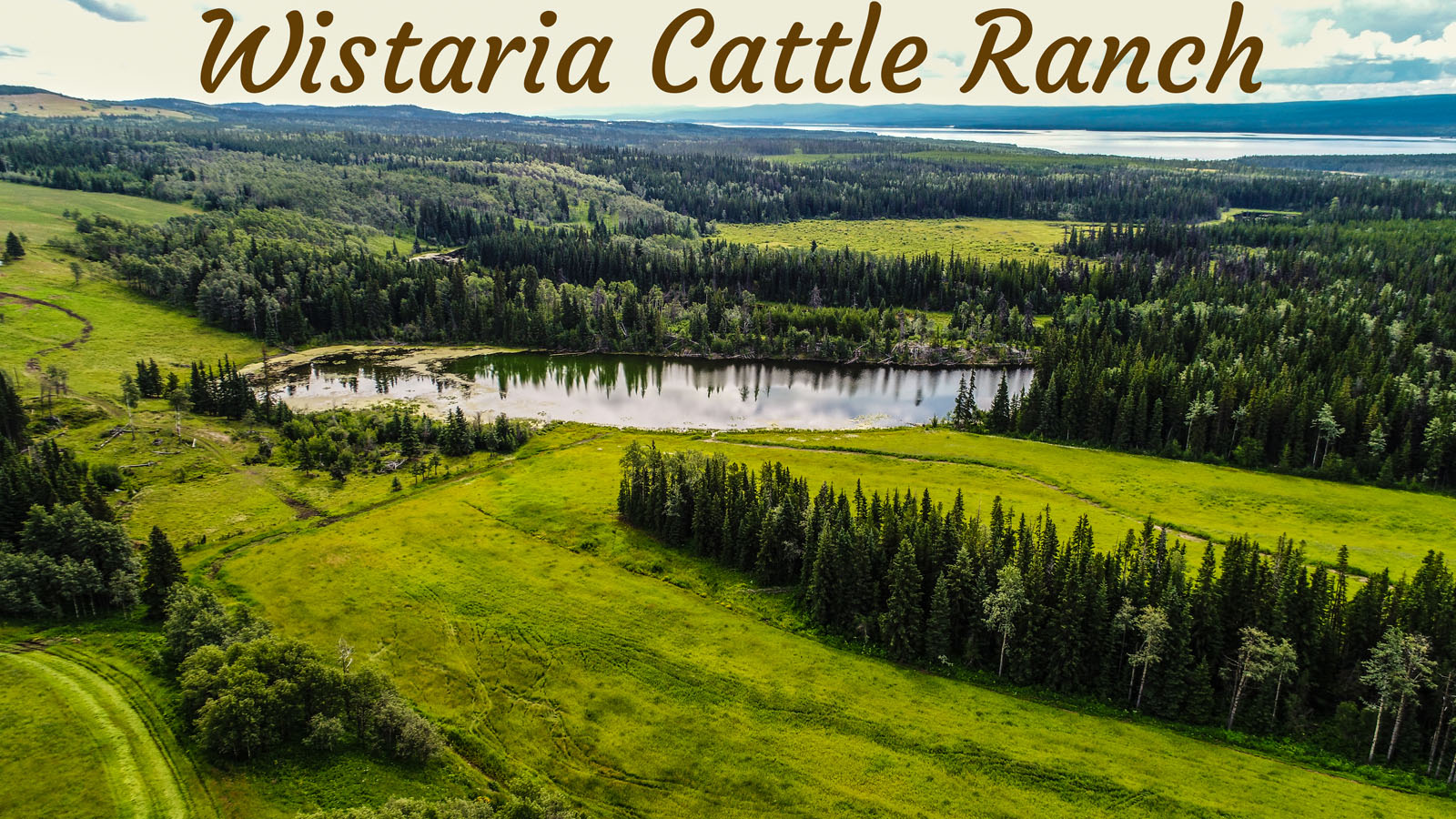 Wistaria cattle ranch 56