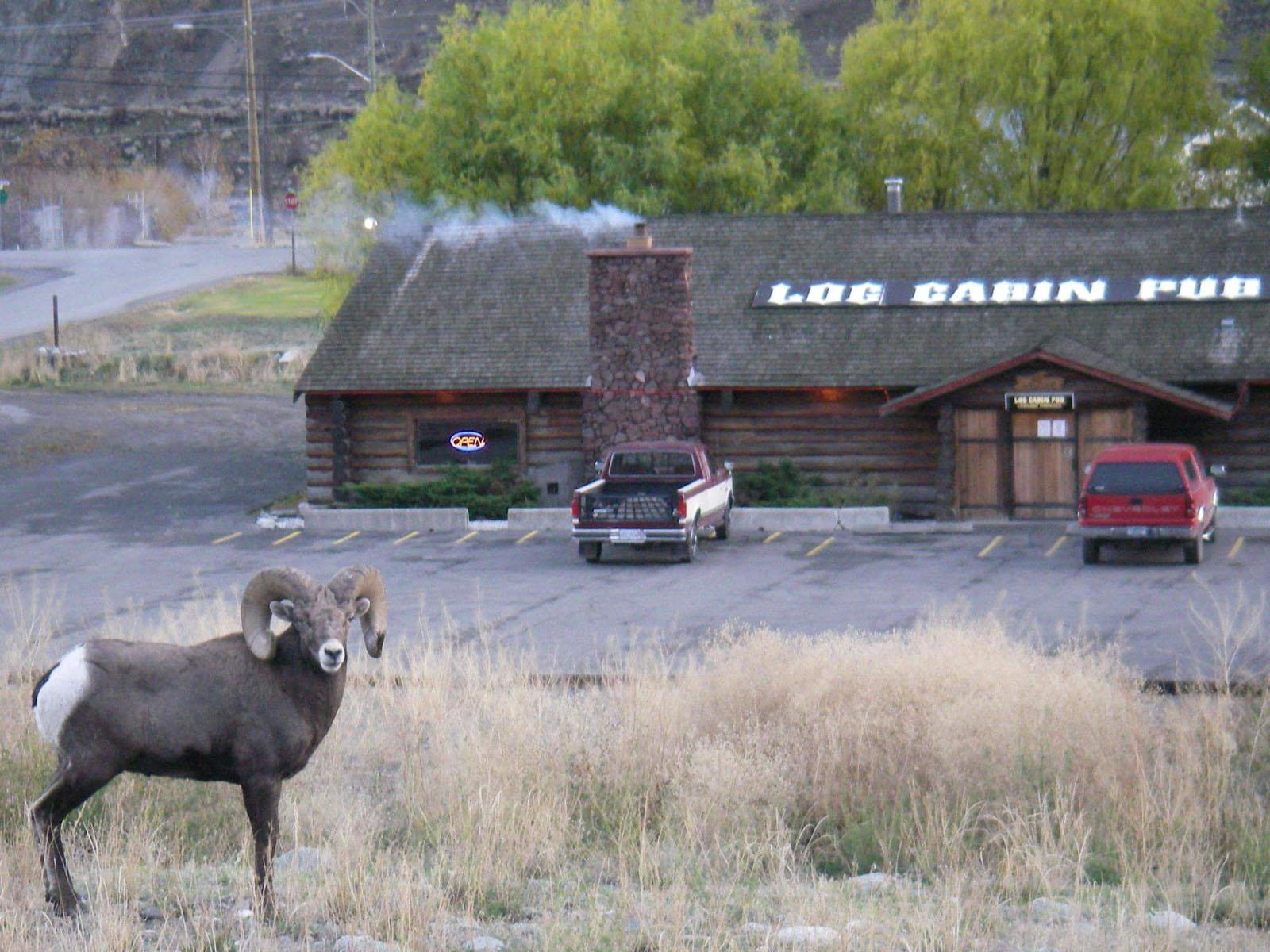 Log cabin pub 34