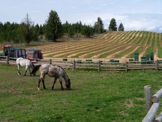 Baccata Ridge Winery - Grindrod, BC