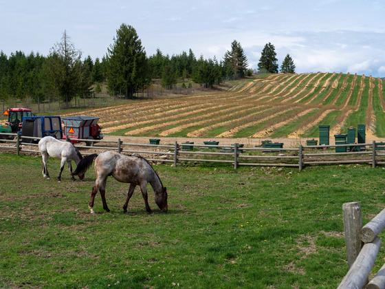 Thumb baccata ridge winery 01
