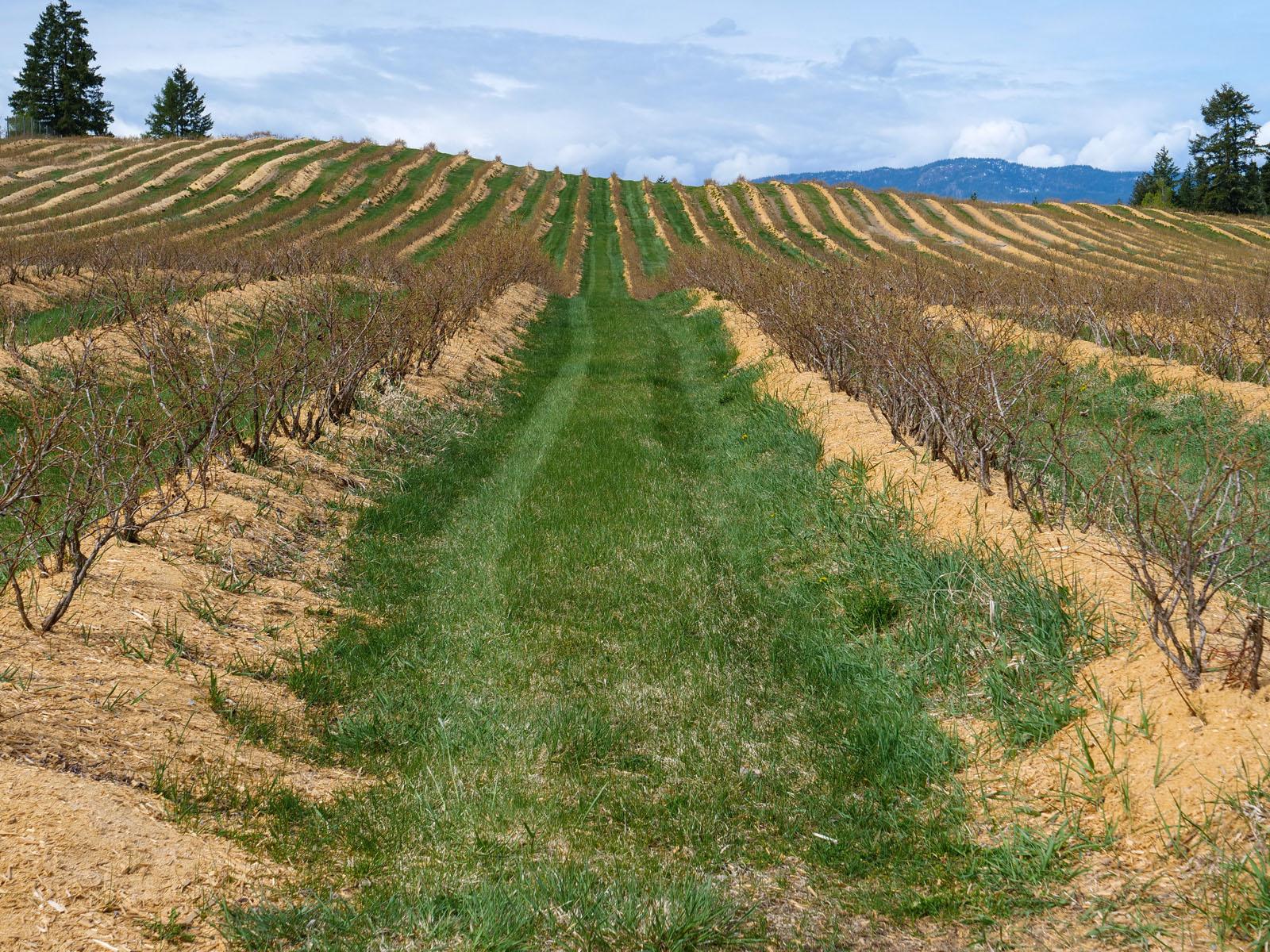 Baccata ridge winery 02
