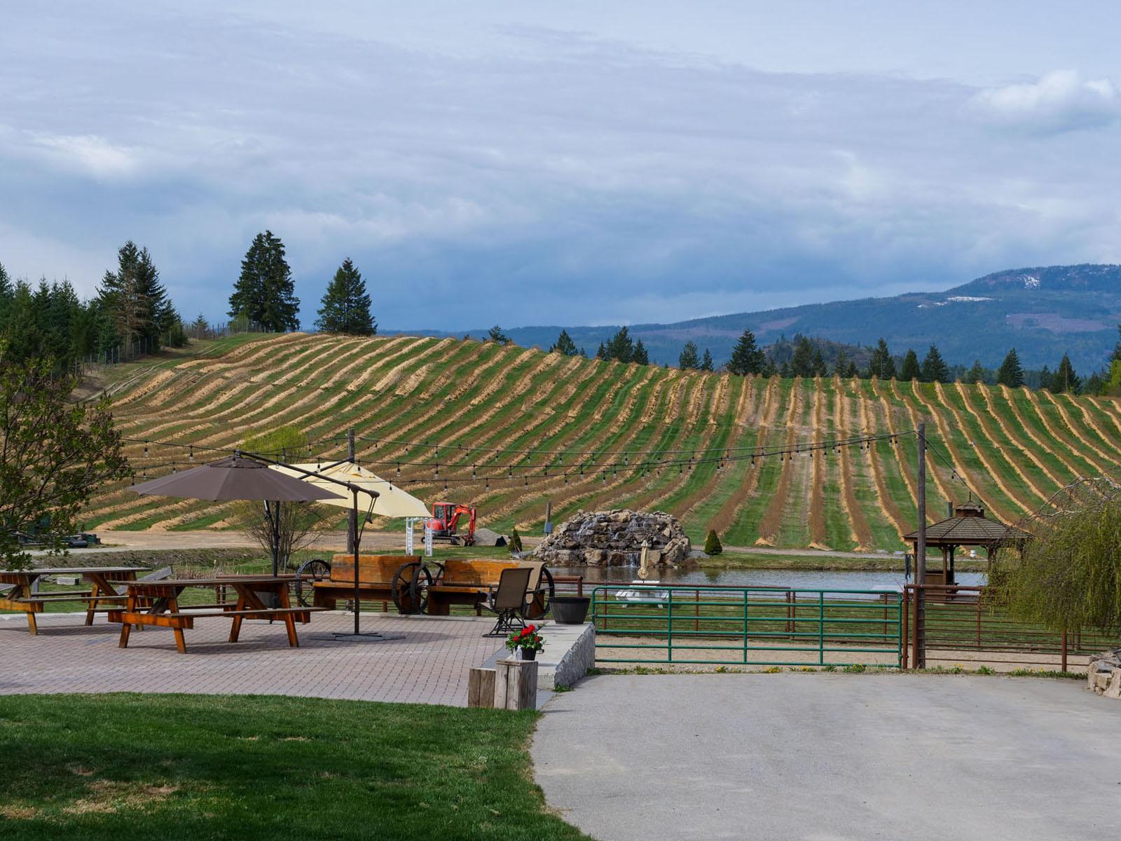 Baccata ridge winery 30
