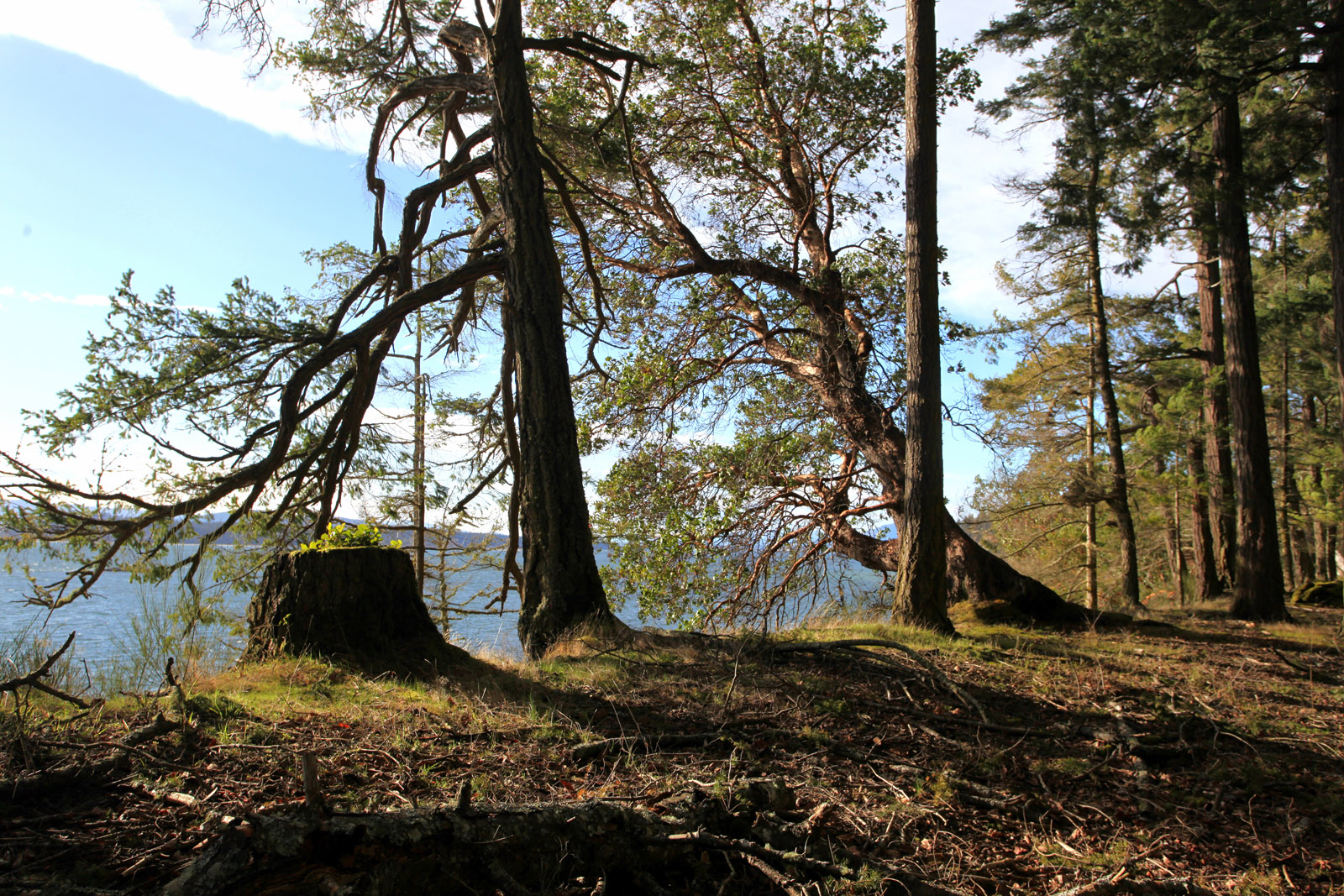 Sidney island 04