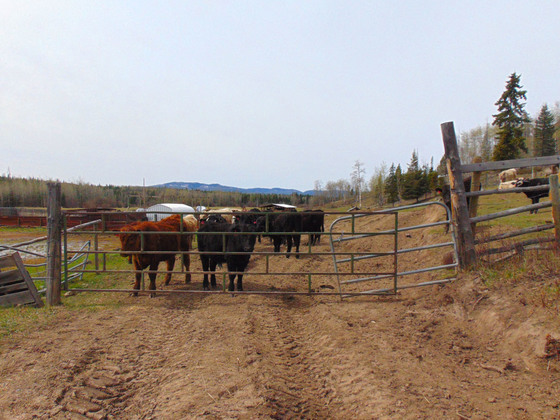 Thumb moose horn ranch 17