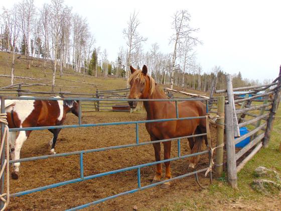 Thumb moose horn ranch 18