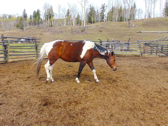 Thumb moose horn ranch 19