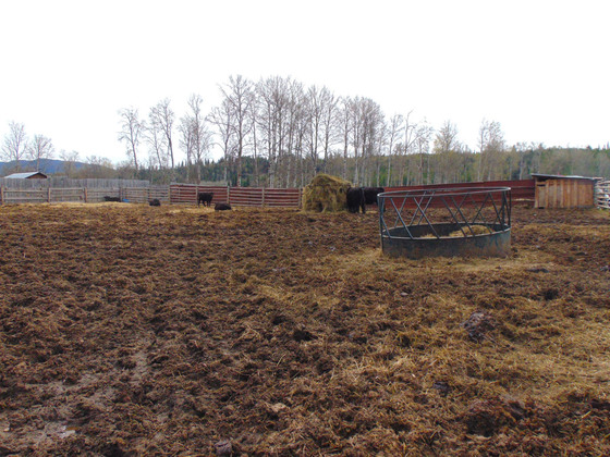 Thumb moose horn ranch 24