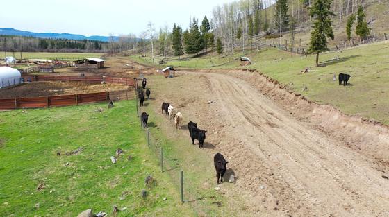 Thumb moose horn ranch 28