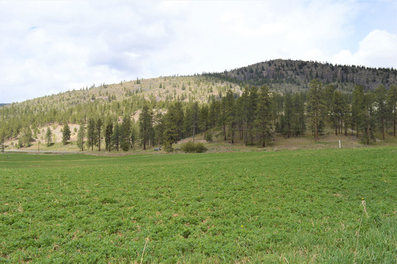 Thumb kuiper ranch 45