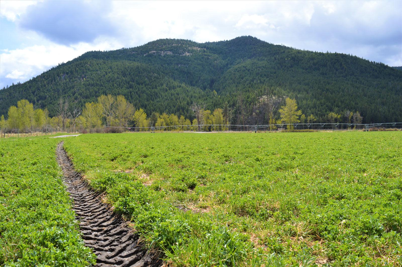 Kuiper ranch 51