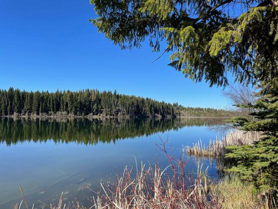 Thumb fawn lake 20