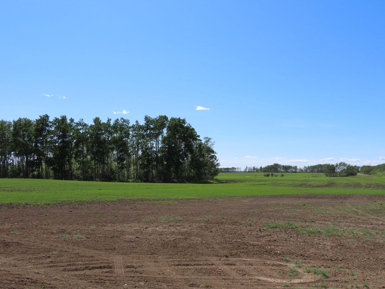 Fort st john grain farm 054