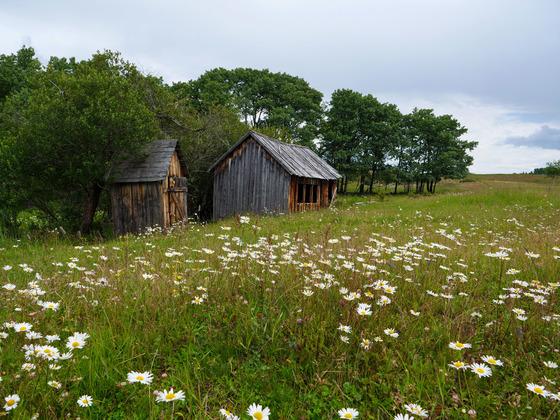 Thumb wistaria farmland ootsa lake 21