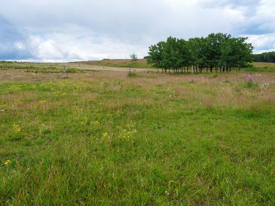 Thumb wistaria farmland ootsa lake 28