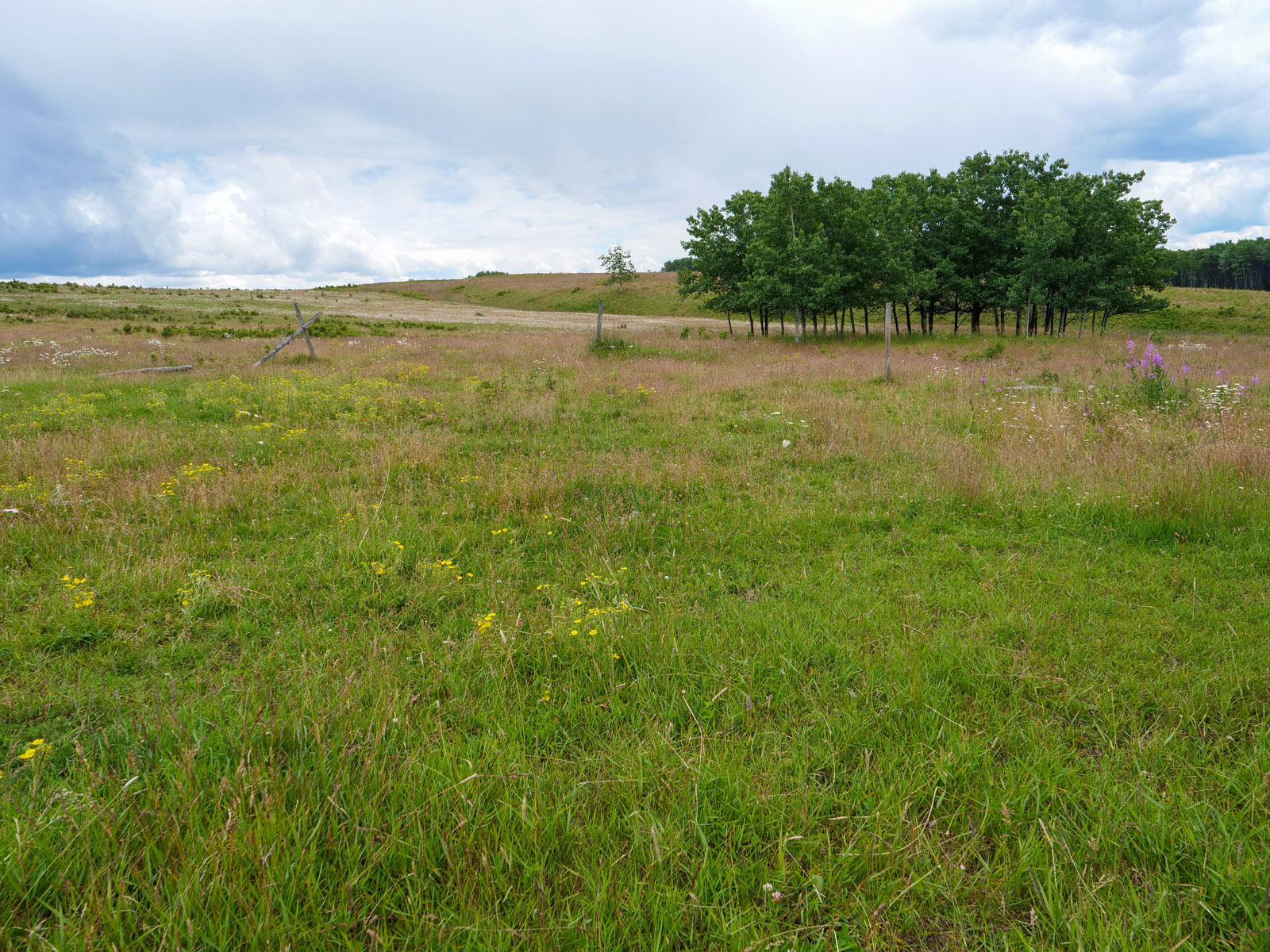 Wistaria farmland ootsa lake 28