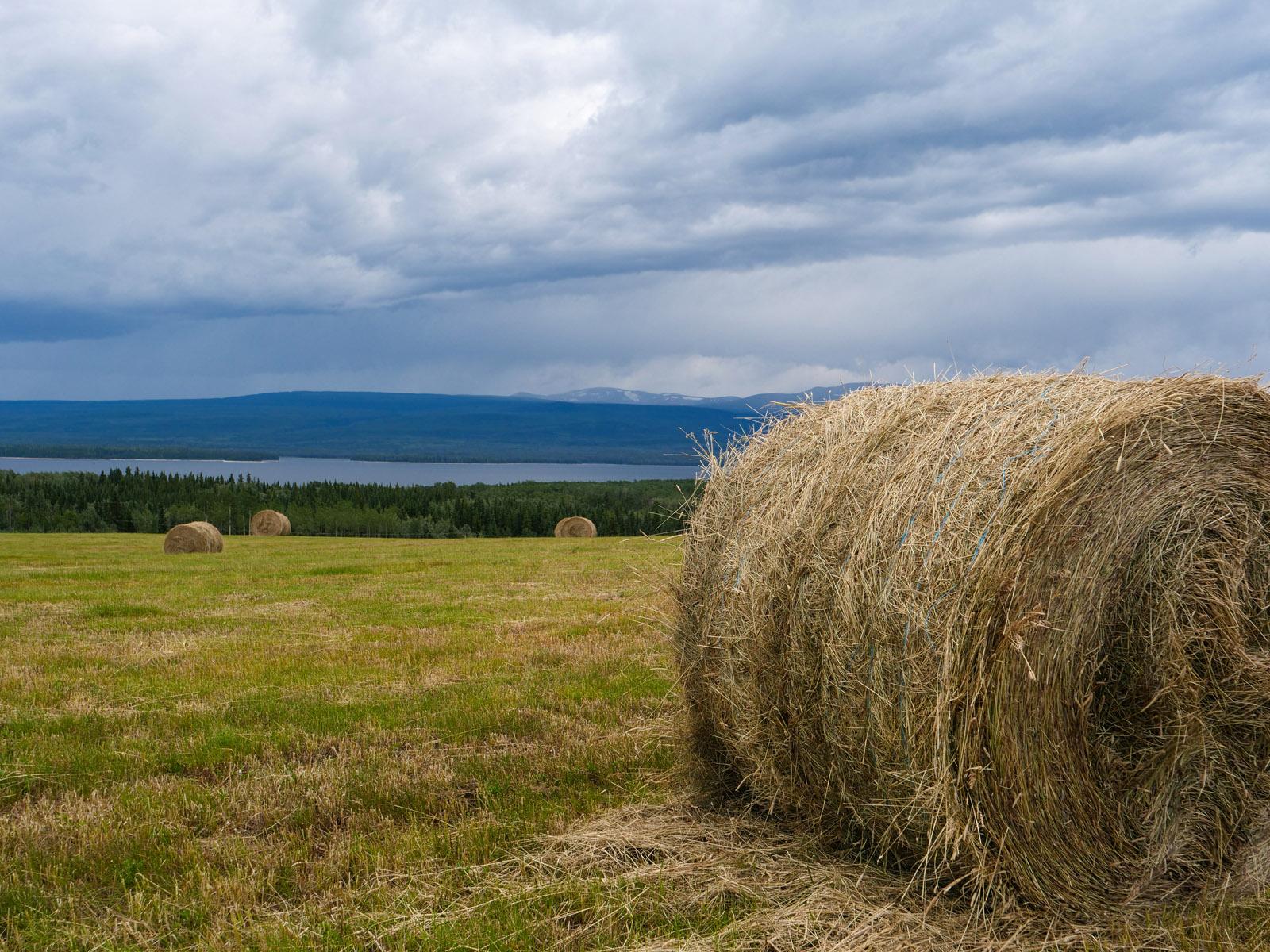 Wistaria farmland ootsa lake 30