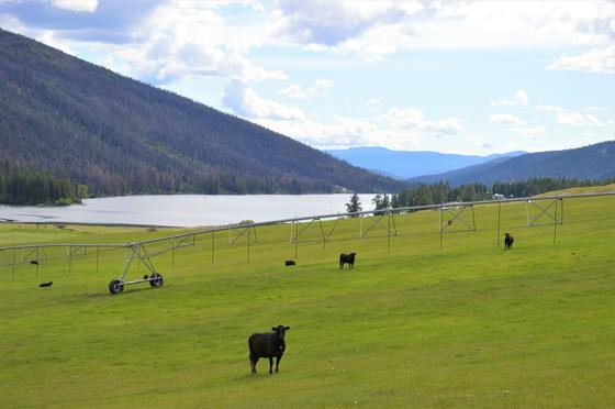 Loon Lake Ranch - Loon Lake, BC