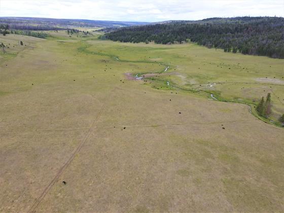Thumb loon lake ranch 09